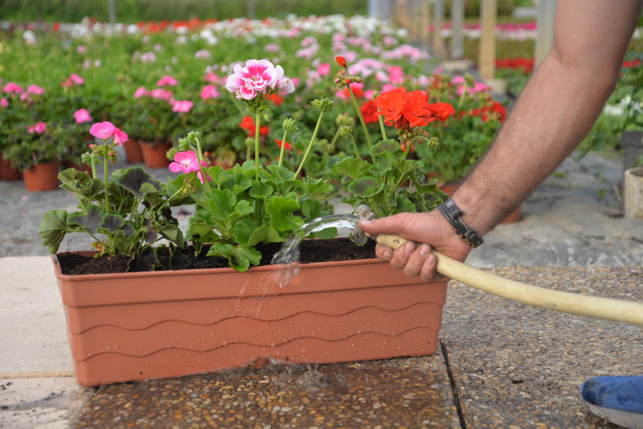 arrosage jardinières Bouchet Freres horticulteurs