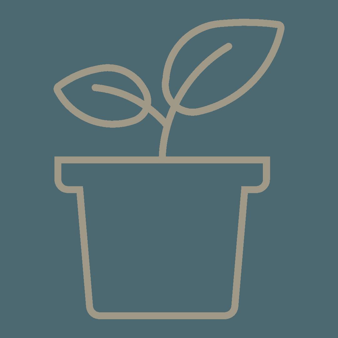 vente des plants de légumes et fleurs direct aux jardiniers, de mai à juin, Bouchet Freres maraichers horticulteur producteur local Cruseilles Haute Savoie