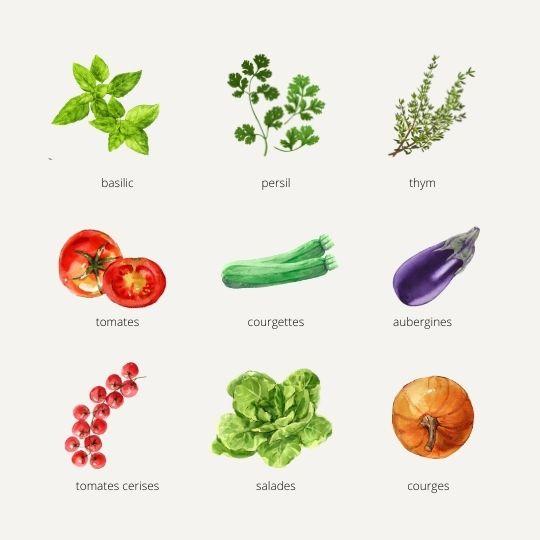 plant en godet pour jardiniers : tomates, courgette, aubergine, persil, basilic, salade, courge, thym... à semer, planter, arroser, jardiner, récolter. Bouchet Frères, horticulteur, producteur local, Cruseilles, Haute Savoie