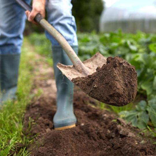 potager, préparation du sol, bêcher, retourner la terre, cultiver, bêche, grelinette, bouchet freres, maraicher Cruseilles Haute Savoie