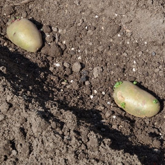 potager, plantations, cultures sous serre, pleine terre, semis, godets, légumes de jardin, bouchet freres, maraicher Cruseilles Haute Savoie