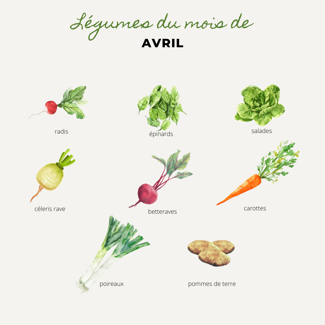 légumes du mois d'avril, radis, épinard, salade,celeri rave, betterave, carotte, poireau, pomme de terre, radis, épinards, salades,celeris raves, betteraves, carottes, poireaux, pommes de terre, légumes de saison, bouchet freres, maraicher Cruseilles, Haute Savoie
