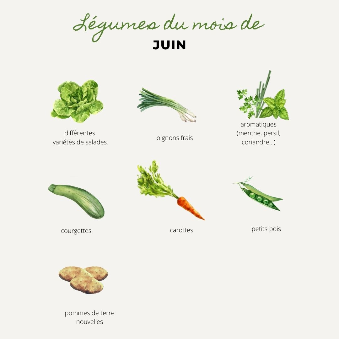 légumes juin, légumes de saison, carottes, pommes de terres nouvelles, patates, courgettes, petits pois, aromatiques, persil, menthe, coriandre, thym, basilic, ciboulette, oignons nouveaux, salades, batavia, feuilles de chene, scaroles, frisées, laitues, carotte, carottes fanes, pomme de terre nouvelle, patate, courgette, petit pois, aromatique, oignon nouveau, salade, batavia, feuille de chene, scarole, frisée, laitue, Bouchet Freres, maraicher, producteur local, Cruseilles, Annecy, Haute Savoie